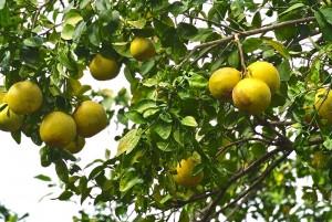 4fruit
