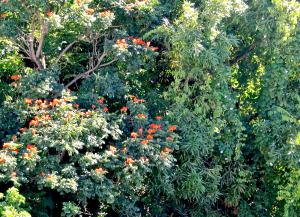 flowertrees-pointseraphin-l