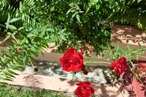 redrosegardens-l