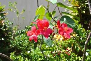 v5-2flowers-l