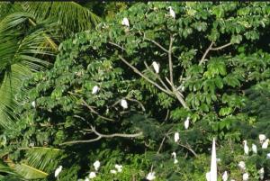 egrets-natural-scantuary-nesting-dawnanddusk