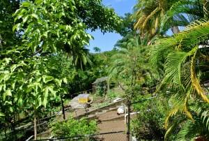 veg-fruit-gardens-poinsettiaestate